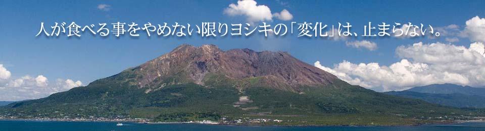 人が食べる事をやめない限りヨシキの「変化」は、止まらない。 基本は、「食」。だけど業態は次々に変わる。 同じ形なのに幾通りもの美しさを見せる 桜島の「七色変化」のように。